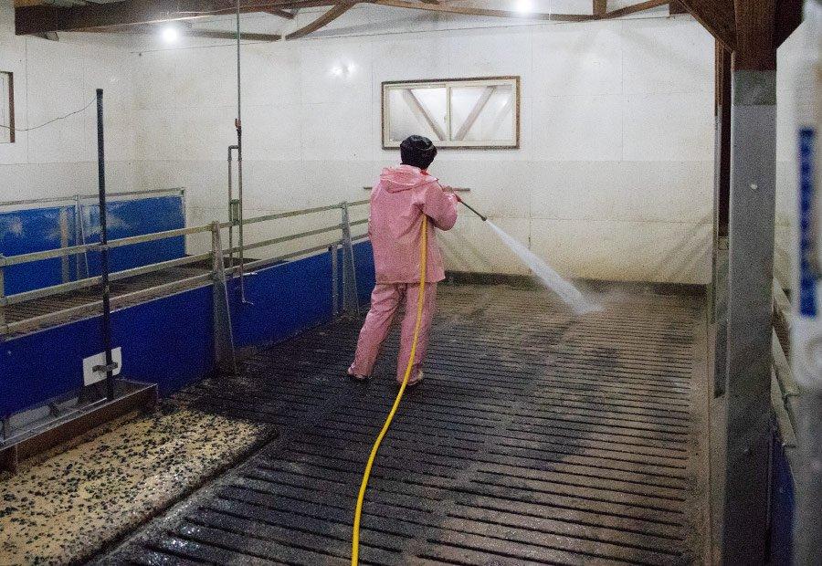 肥育課 豚舎の洗浄