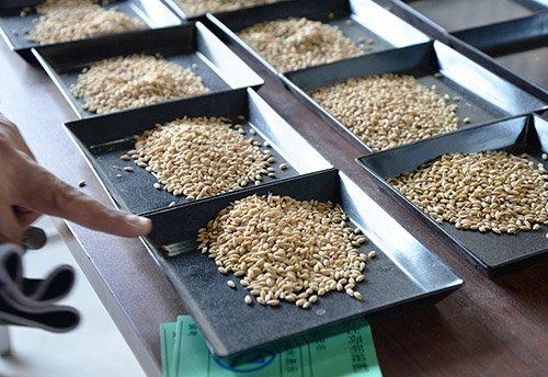 飼料用米の検査